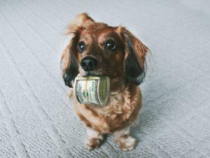 week: de kansrijkste dogs