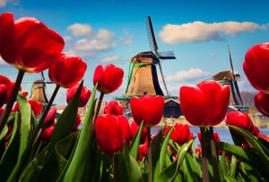 Populair deze week: Nederlandse technologie