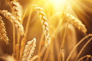 landbouwgrondstoffen nog steeds koopwaardig