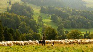 Toekomst Nederlandse landbouw- en tuinbouwsector