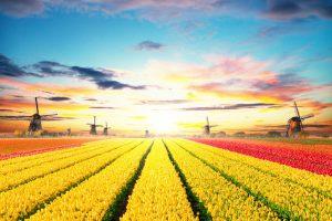 Beurzen Vandaag: Nederlandse aandelen bij de top in Europa